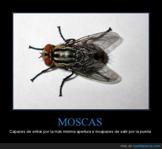 estupidas,moscas