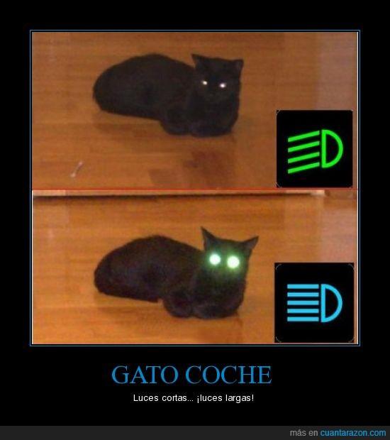 coche,cortas,gato,largas,luces