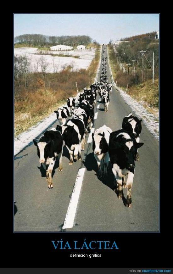 carretera,gráfica,vacas,vía láctea
