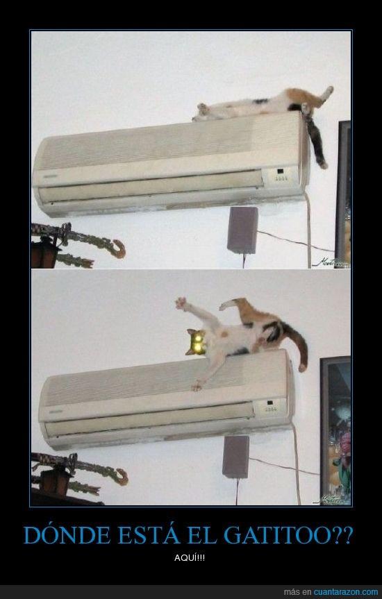 aqui,donde esta,gatito