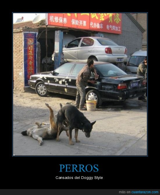 doggy style,perros
