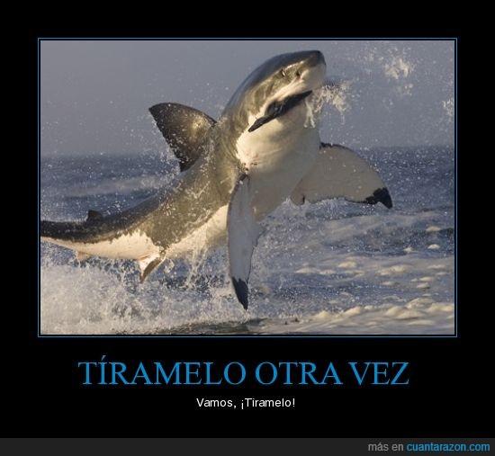 comer,pez,saltar,tiburón