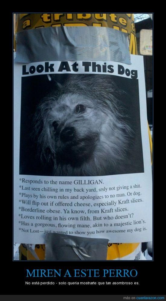 cartel,foto,GILLIGAN,perro,win
