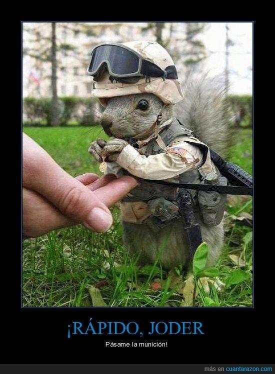 ardilla,ejercito,guerra,soldado