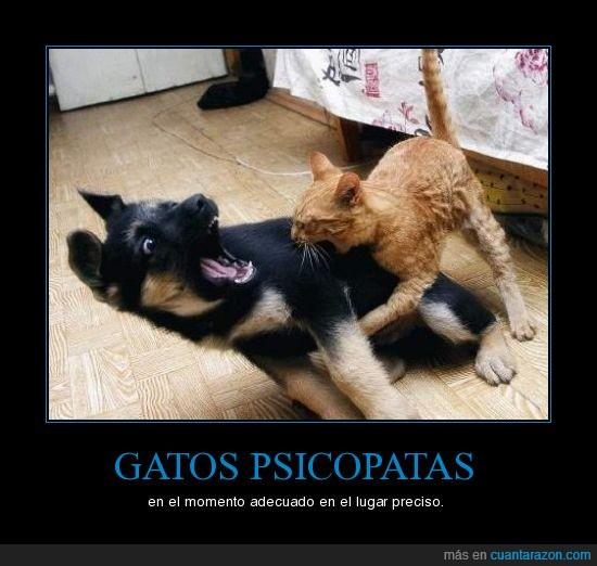 gatos,perros,psicopatas