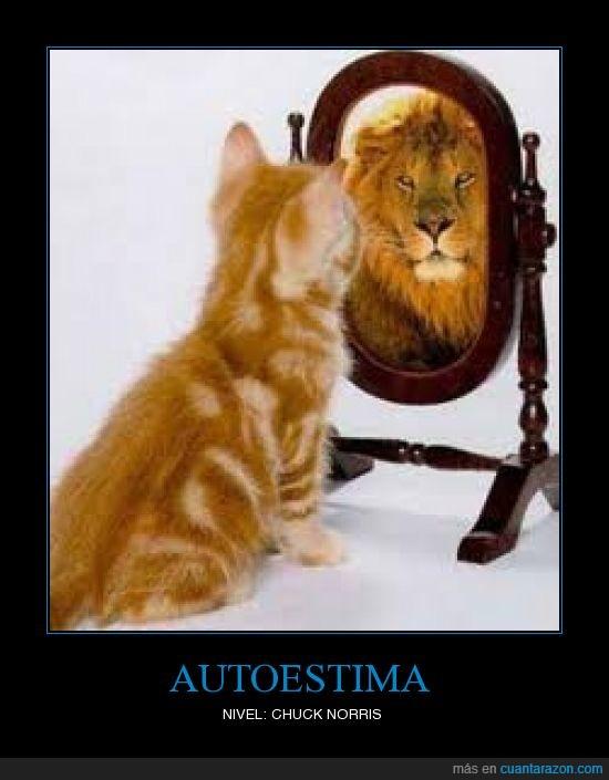 espejo,gato,leon
