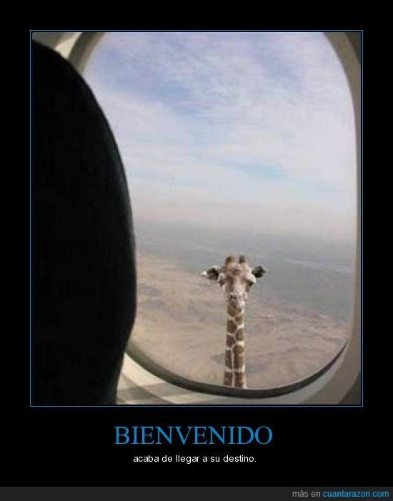 avión,destino,jirafa