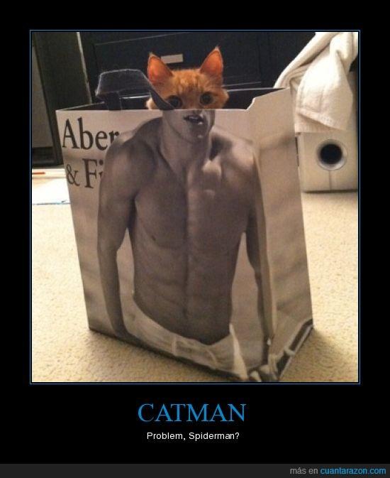 catman,gato