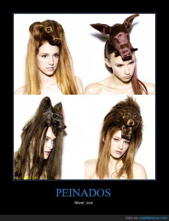 animales,cabeza,peinado,zoo