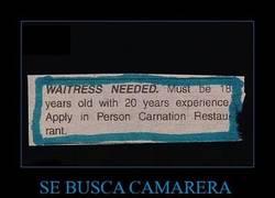 Enlace a SE BUSCA CAMARERA