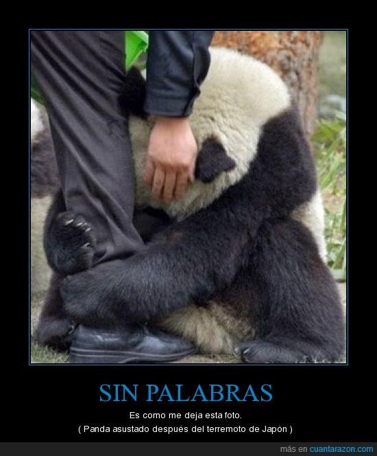 Japón,miedo,palabras,Panda,terremoto