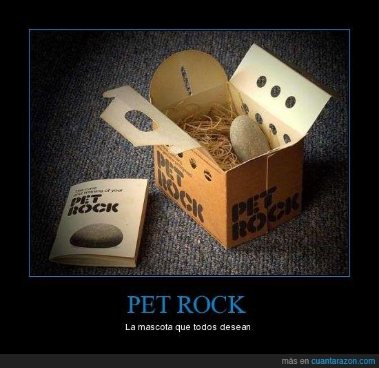 mascota,piedra