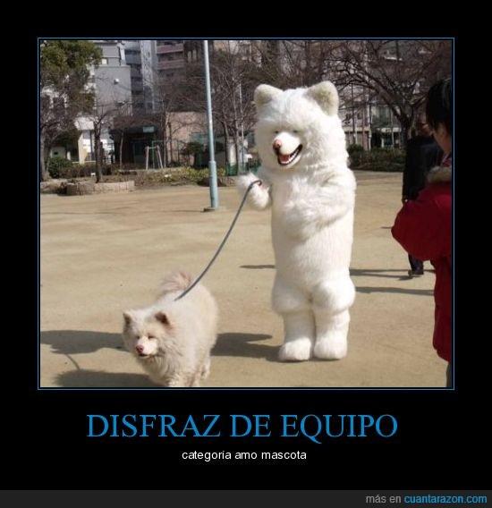 carnaval,disfraz,perro