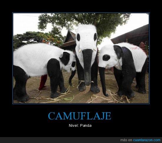 animal,elefante,panda