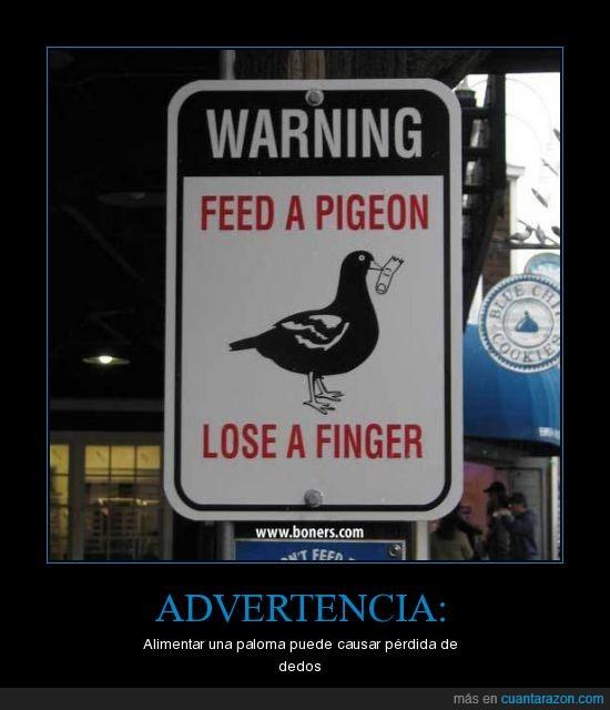 animales,fail,lol,palomas
