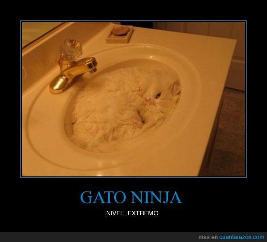 aixeta,camuflaje,dormido,extremo,fregadero,gat,gato,grifo,lavabo,ninja,pica,vigilante,wc