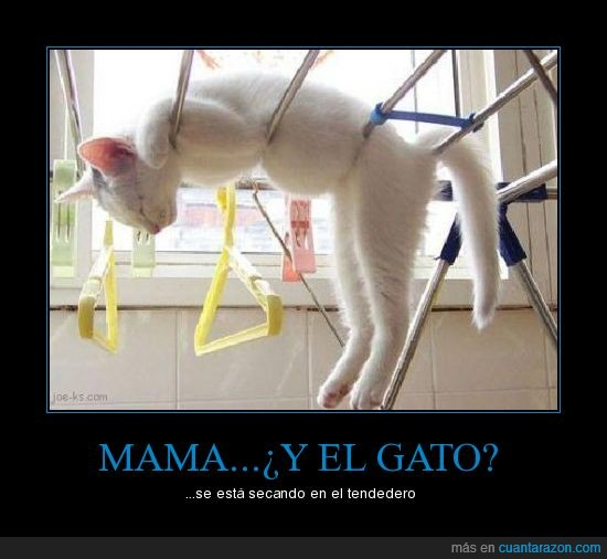 gato,lavar,madres
