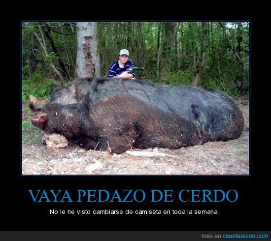 camiseta,cerdo gigante,niño