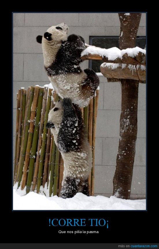 Ladrones,Nieve,Panda,Policia