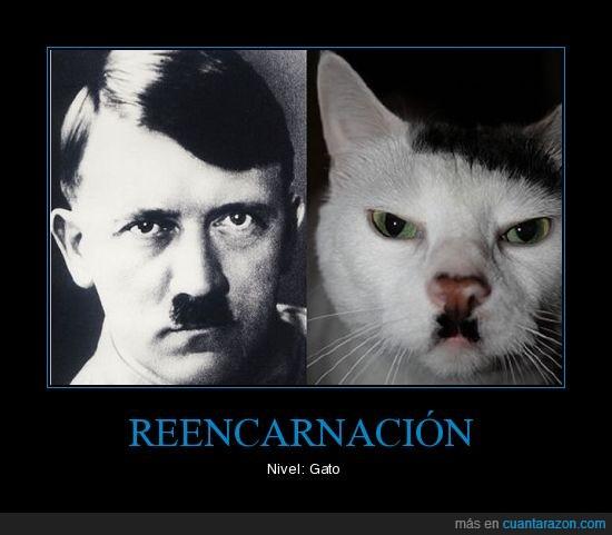 bigote,gato,hitler