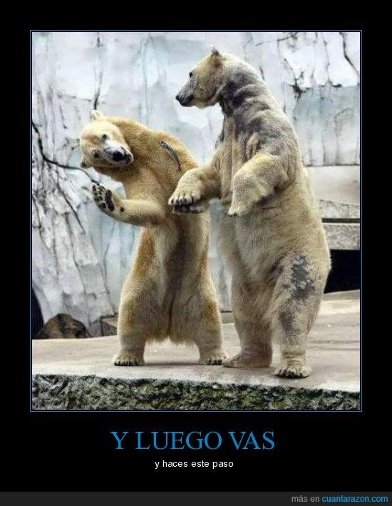 bailar,osos,pasos