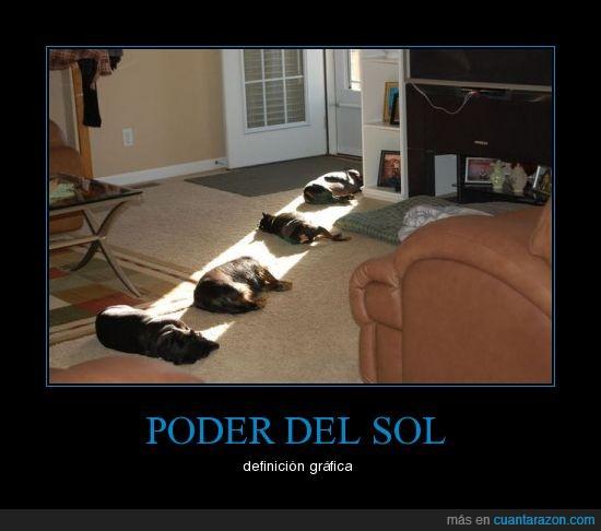 calor,dormir,perros,poder,sol