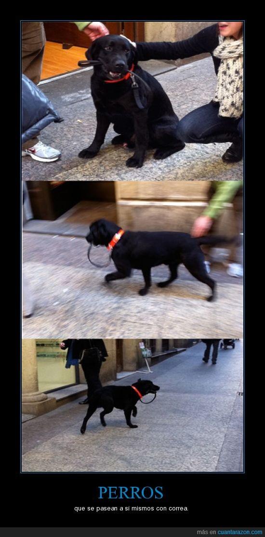 correa,divertido,movil,pasear,perro,solo