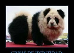 Enlace a CRISIS DE IDENTIDAD
