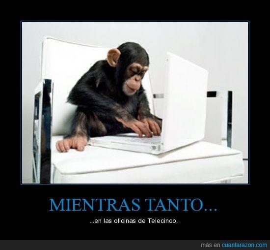 mono,ordenador,telecinco,trabajar