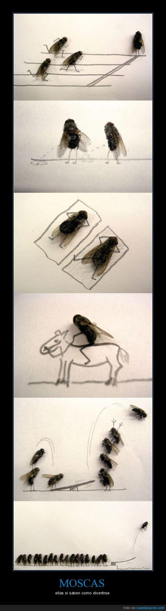 asco,creatividad,creativo,diversión,moscas