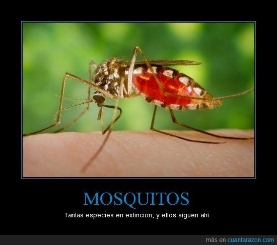 extinción,insecto,mosquito,picada