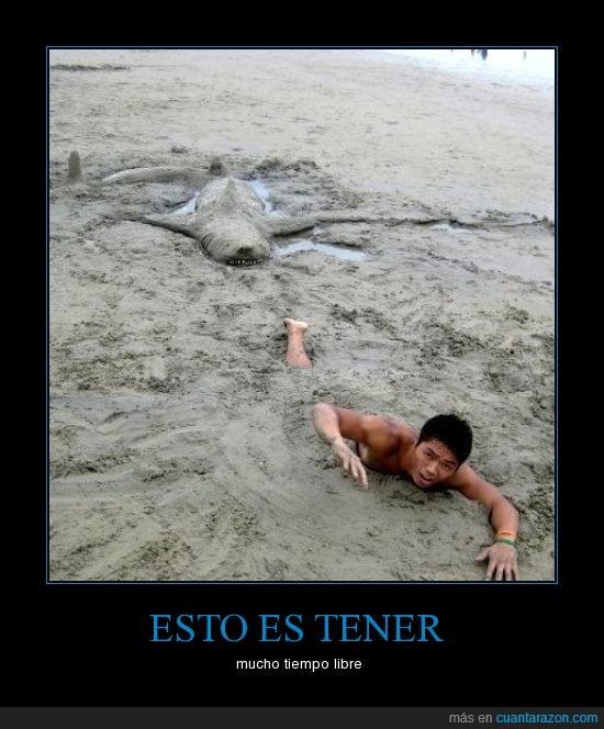 arena,playa,tiburón
