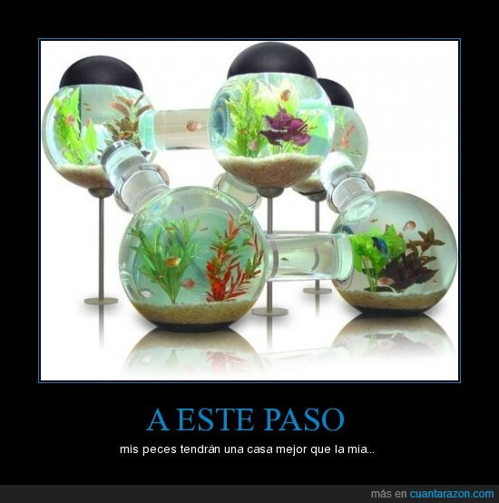 casa,peces,vivir