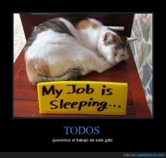 dormir,gato,trabajo