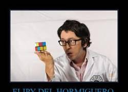 Enlace a FLIPY DEL HORMIGUERO