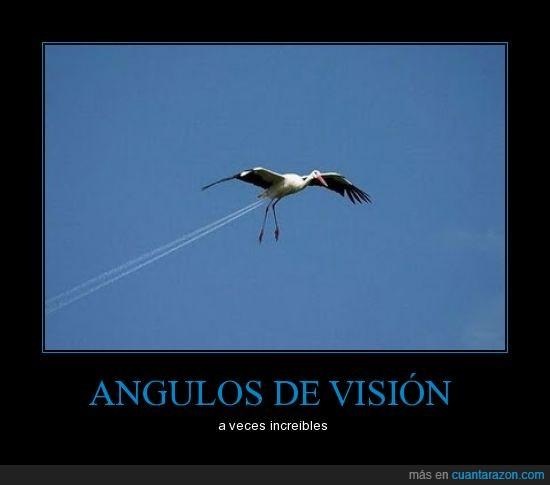 angulos,cigueña,increible.,visión
