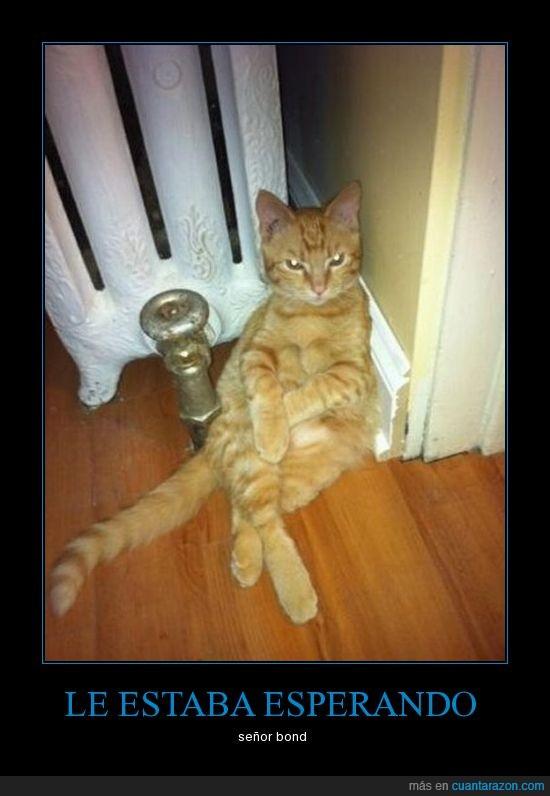 esperar,gato,james bond