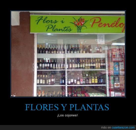 bebida,botellas,flores,plantas,tienda