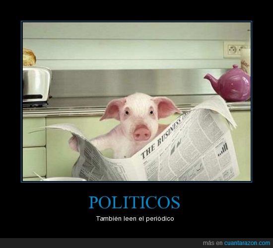 cerdo,periódico,políticos