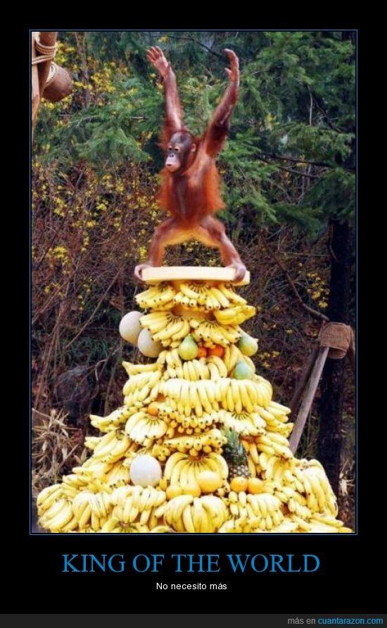 mono,rey,torre