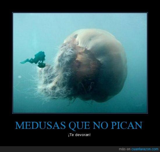 devorar,mar,medusa