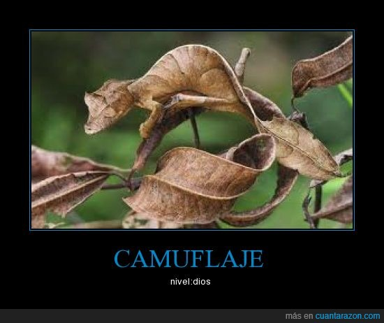 camaleón,camuflaje,dios