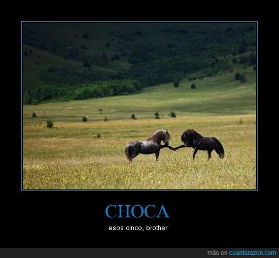 caballos,chocar,cinco