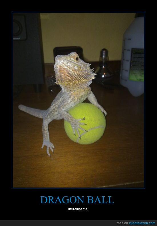 ball,dragones,pelota