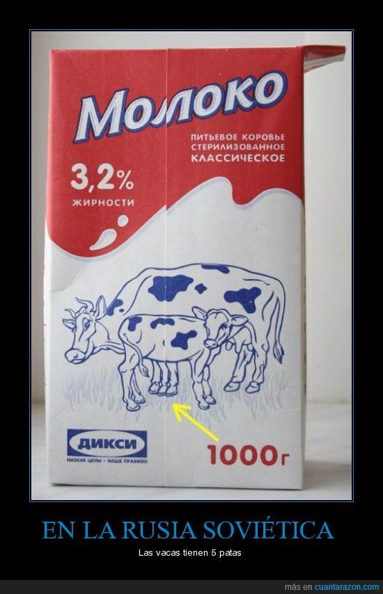 patas,Rusia sovietica,vaca