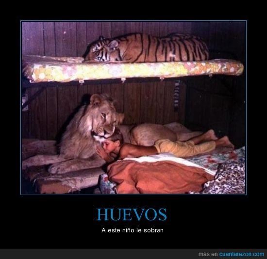 dormir,huevos,leon,niño,tigre
