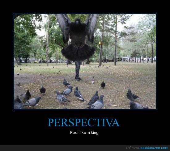 feel like a ninja,Persectiva