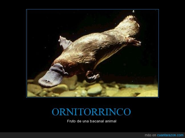 animal,ornitorrinco