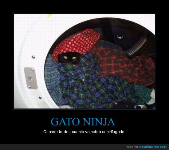gato,lavadora,ninja