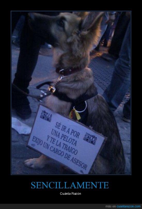 cartel,cuanta razón,perro